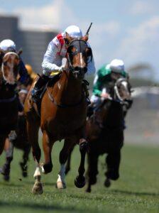 bet on horses online